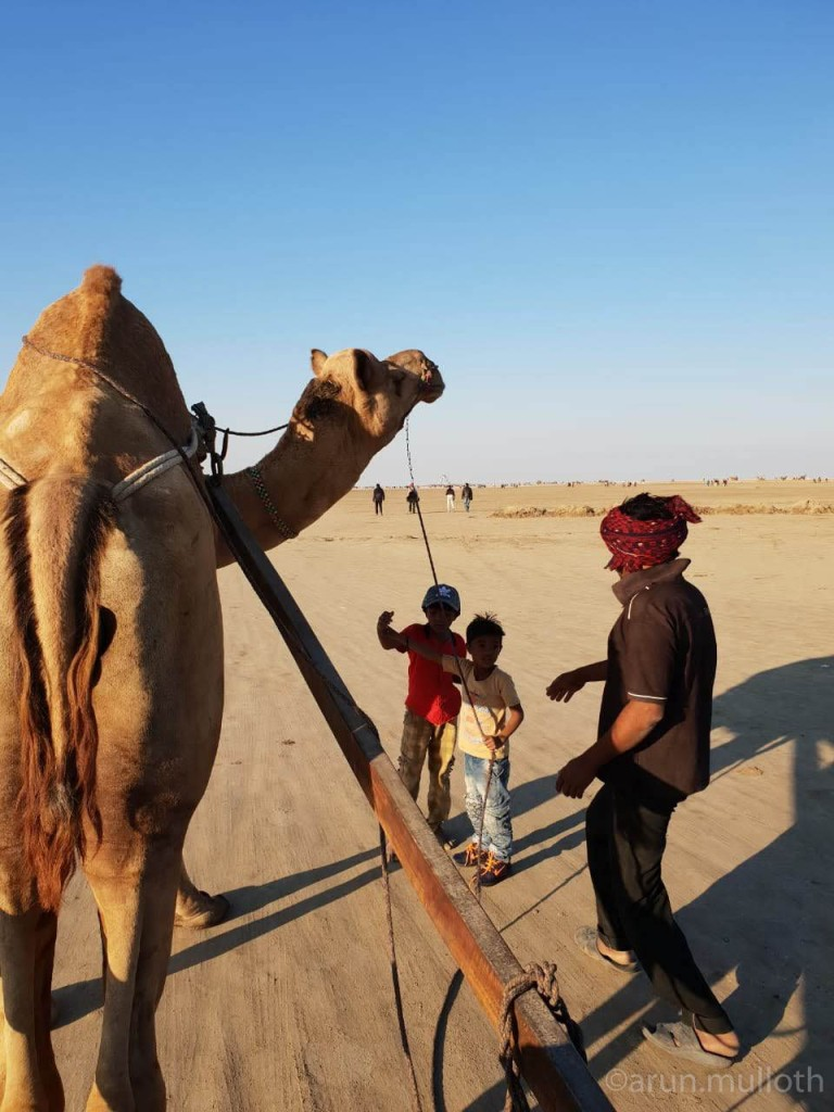 """Our Camel ride at Rann of Kutch - """"Badal"""""""