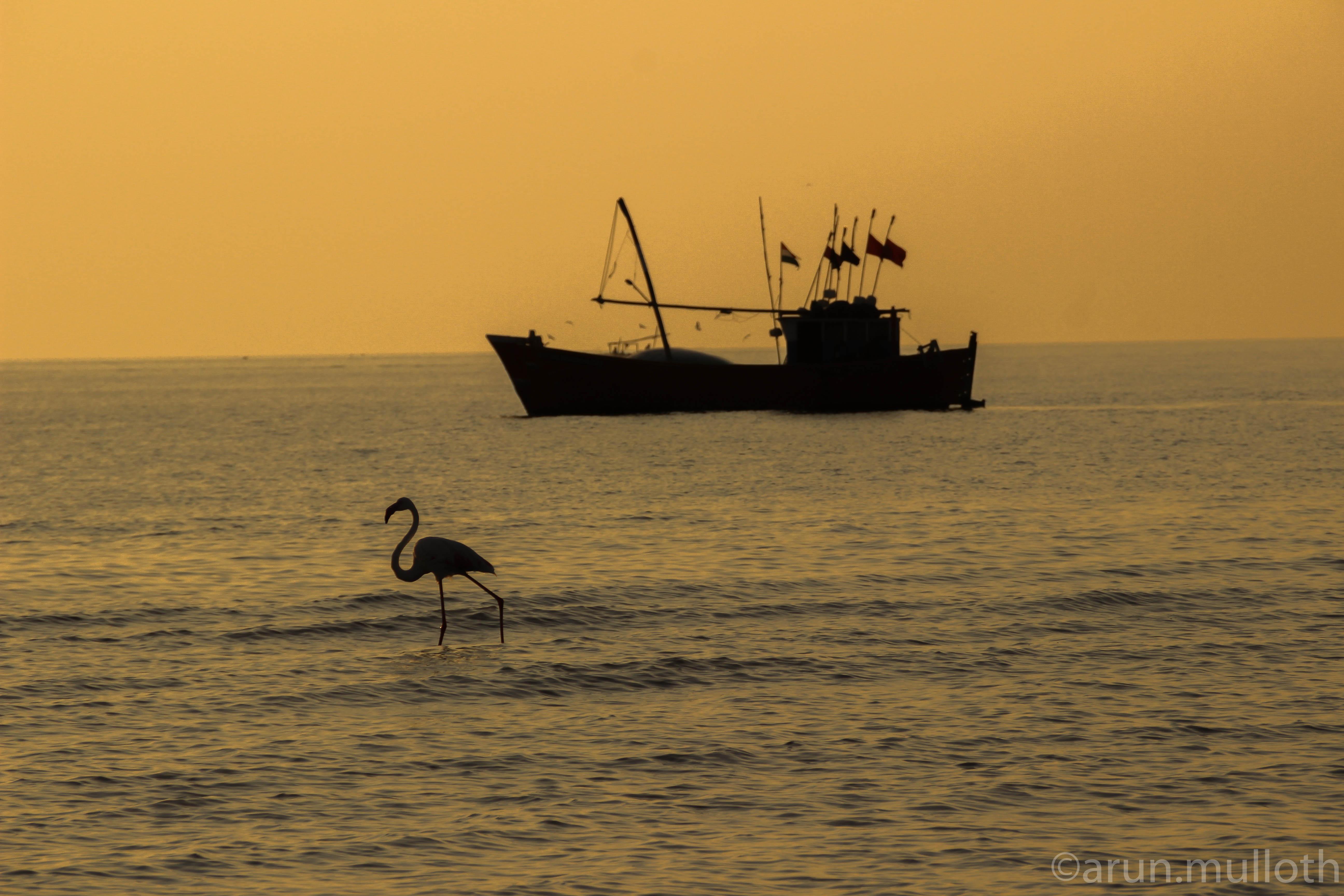 Golden hues at Modhva Beach, Mandvi